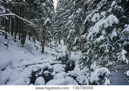 Mountain stream in a snowy forest in the Giant Mountains in Poland