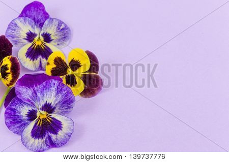 Violet And Yellow Flowers