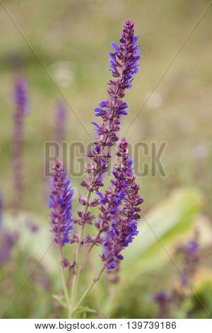 Closeup photo of beautiful gentle wildflower outdoors