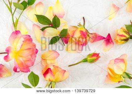 Red And Yellow Roses On White Background