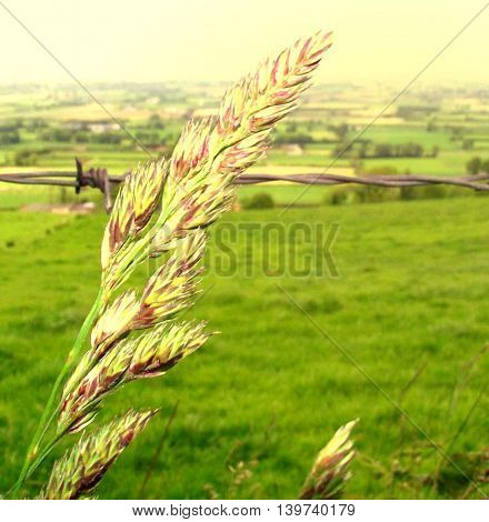 Scenic view of grass blowing in the wind on a green, Irish pasture