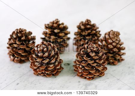 Set of six brown pine cones - Christmas symbol