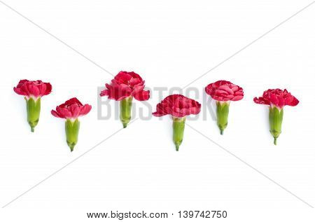 Isolated red meadow flowers on a white background