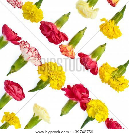 Isolated bright meadow flowers on a white background