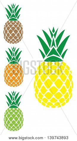 vector illustration of a set of pineapples