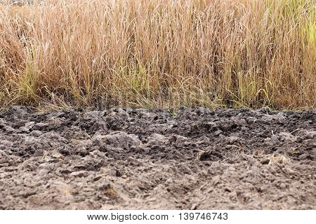 Ground of agricultural areas and dry grass background for design outdoor nature.