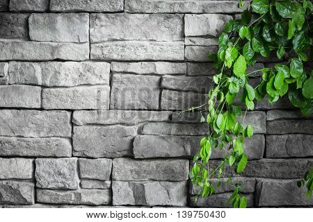 brick wall with green creeper plants .