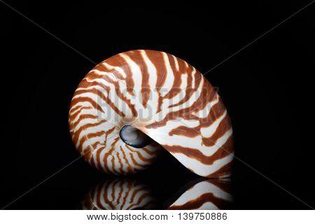 nautilus shell isolated on black background
