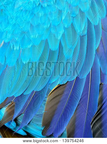 Beautiful Feathers Of Blue And Gold Macaw Parrot Bird, An Exotic Blue Texture