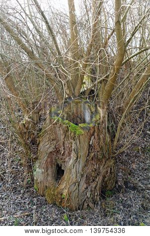 old hollow tree trunk on the wilderness