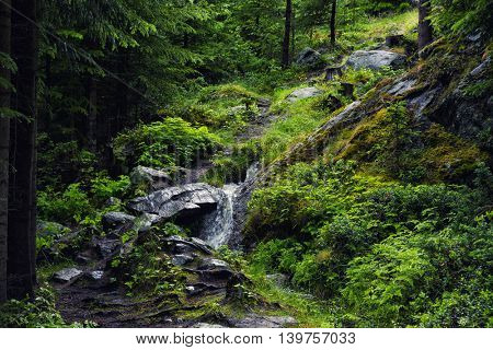 Beautiful Green Forest In Summer, Norway