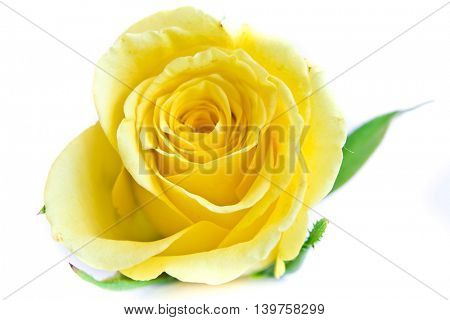 close-up of yellow rose petals