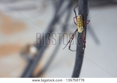 spider web spiders background macro nature animal,