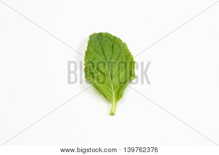 Green Mint Leaf Fresh on white background