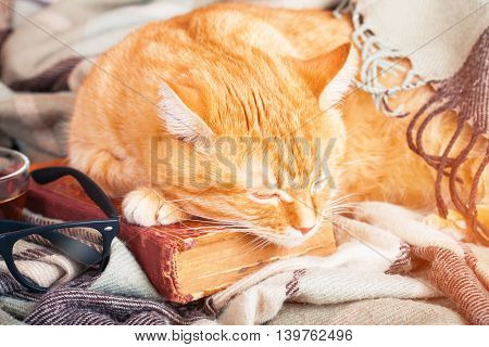 Cute ginger cat sleeping on a book on plaid