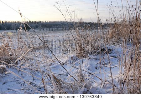 Grass In The Snow And Winter Sunrise