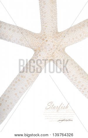 Starfish. Isolated on white background