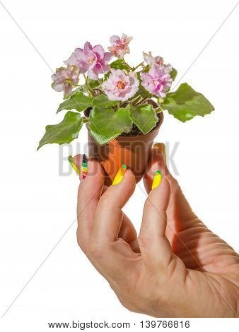 Pot Of Violets In Her Hand
