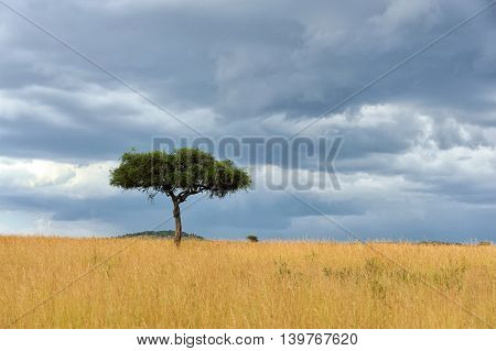 Beautiful landscape with one tree in the Africa