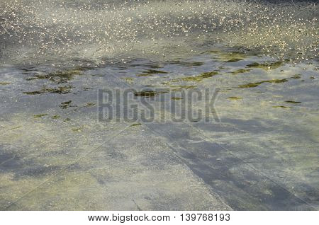 Geen water texture and small droplets for background