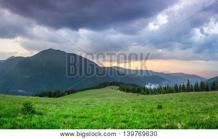 Sunset in the mountains. Summer landscape with fir forest and mountain peaks. Carpathians, Ukraine, Europe