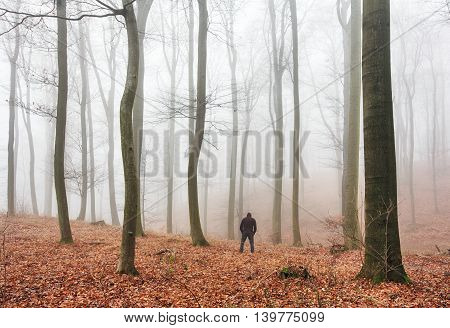 Mist covers the silhouette of the trees in autumn Forest