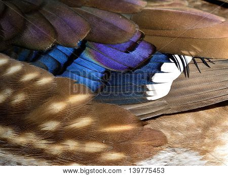 Colorful Background And Texture Of Mandarin Duck (aix Galericulata) Feathers, Exotic Nature Texture