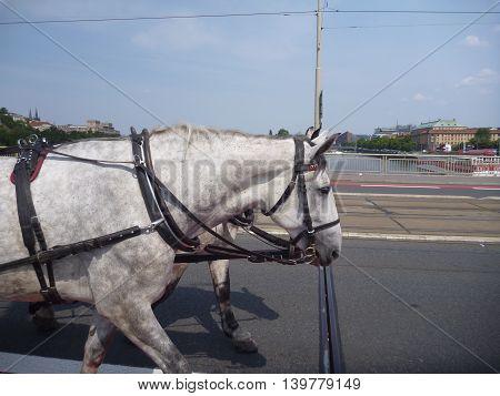 Touristic Horse Ride In Prague City