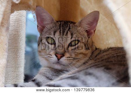Cat portrait close up. Beautiful cat eye.