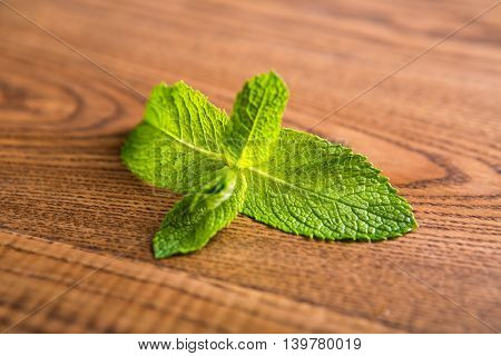 Green leaves of mint. Leaves on brown wooden background. Natural ingredient of a drug. Nature is a knowing doctor.