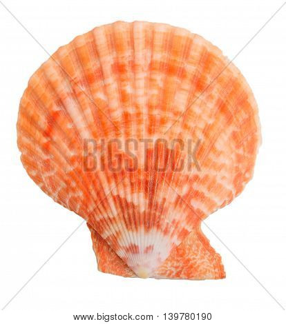 isolated colorfull sea shell on white background