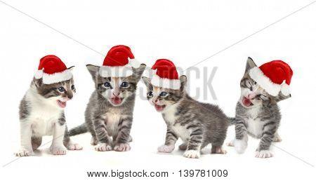 Singing Christmas Kittens Wearing Red Hat on White