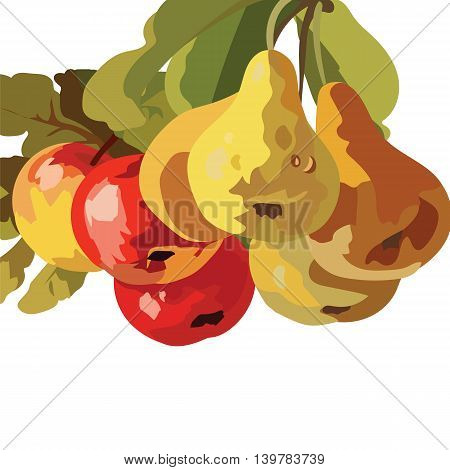 Watercolor Pears and Apple Fruits isolated on white background. Vector