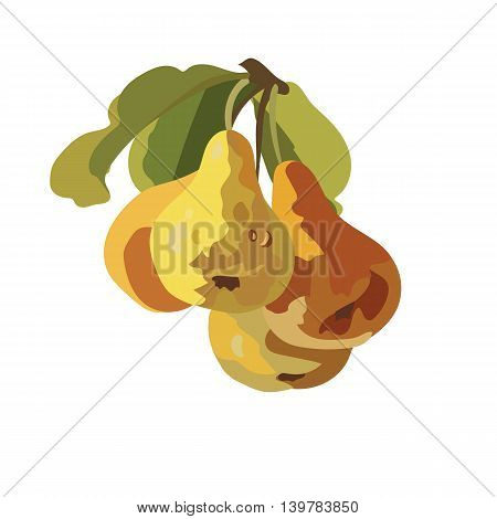 Watercolor Pears Fruits Vector isolated on white