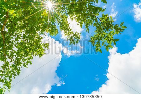 Beautiful trees branch on blue sky