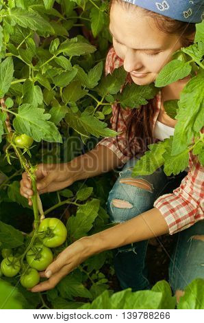 young girl cares for immature green tomatoes in the greenhouse