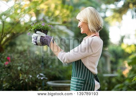 Side view of mature female gardener holding potted flowering plant at greenhouse