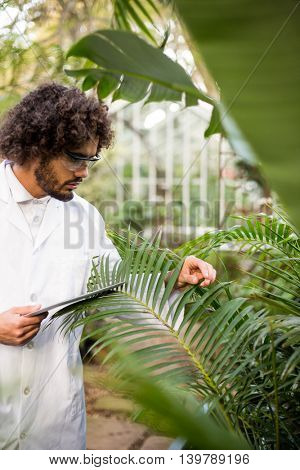 Male scientist examining plants while holding tablet computer at greenhouse