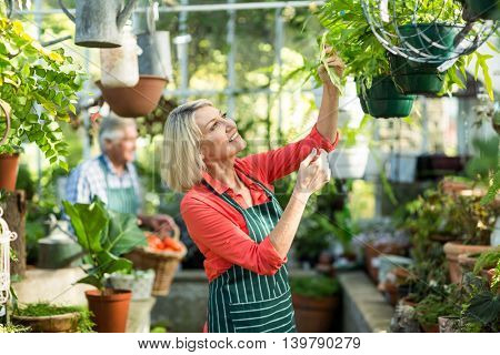 Woman inspecting potted plants hanging at greenhouse
