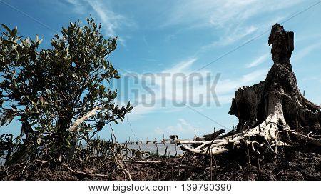 Wooden Animal, Buzzard Bird Shape