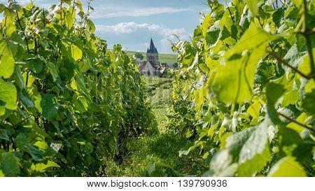 Church In A Vineyard