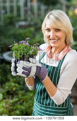 Portrait of happy mature female gardener holding potted flowers at greenhouse