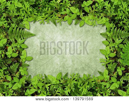 soil background rainforest with moss and ferns