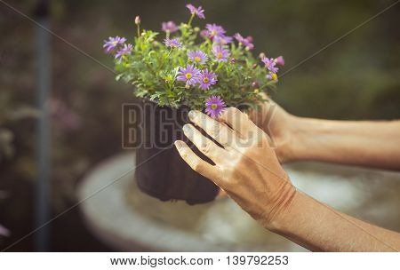 Cropped image of gardener holding potted flowers at greenhouse