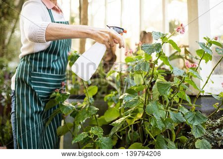 Midsection of female gardener spraying water on plants outside greenhouse