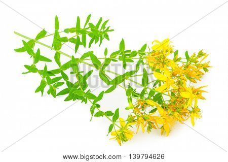 St John's wort isolated on white