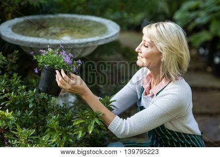 Side view of female gardener holding potted flowers while working at greenhouse