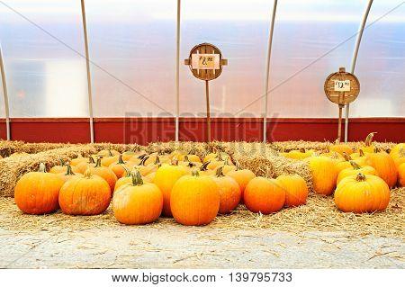 Pumpkins for sale on autumn market