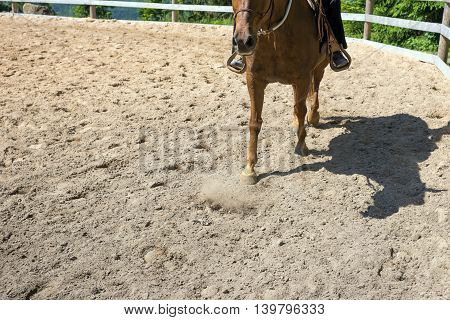 Horse when riding in the paddock on sand