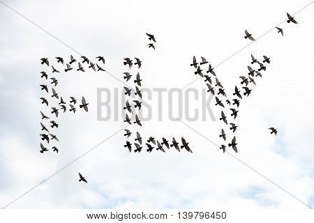 flock of birds forming the word fly abstract concept